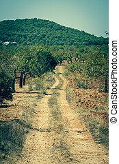 ilha ibiza, paisagem, com, agricultura, campos, ligado, barro vermelho, solo