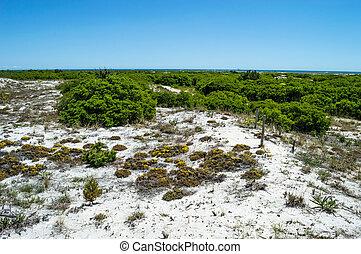 ilha, praia, vegetação, longo, nativo