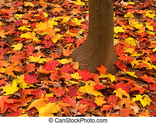 Illinois Autumn Forest Landscape