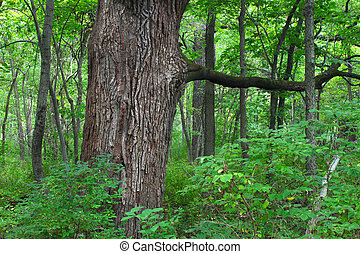 Illinois Forest Background