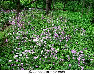 Illinois Forest Scene