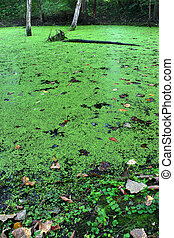 Illinois Forest Wetland Landscape