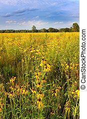 Illinois Prairie Flowers in Bloom