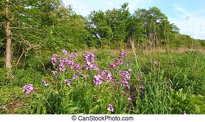 Illinois Prairie Scene - Prairie plants sway in the wind on...