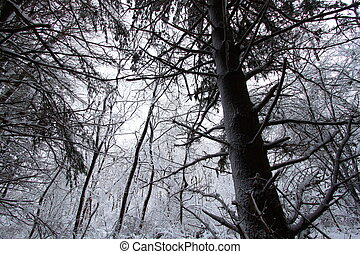 Illinois Snowy Forest Landscape
