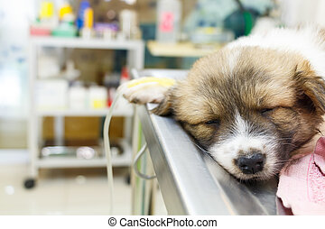 illness puppy with intravenous drip on operating table