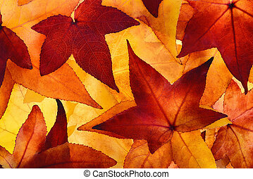 Illuminated autumn leaves with glowing colours