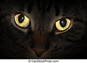 Illuminated cat eyes