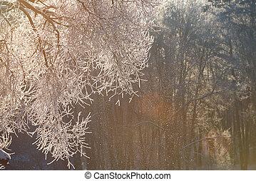 Illuminated snow on tree branch