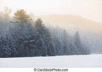 Illuminated Snowy Winter at sunrise