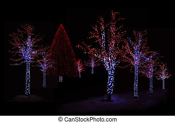 Illuminated trees at night