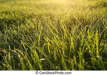 illuminating sunlight lush green grass, natural background
