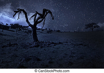 illuminato dalla luna, albero