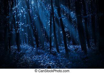 illuminato dalla luna, foresta, notte