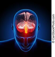 illustré, cerveau, humain, petit, nerfs, millions