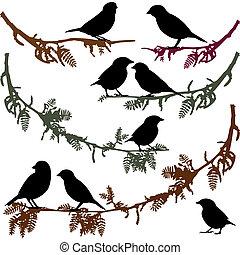 illustr, vector, árbol, aves, rama