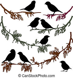 illustr, vettore, albero, uccelli, ramo