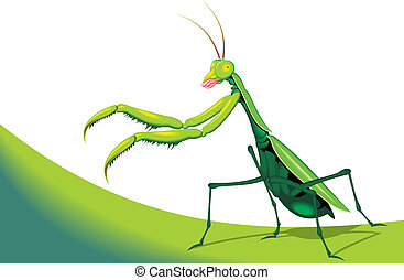 illustrated green mantis on the white background