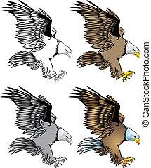 illustrated nice eagle isolated on white background