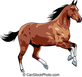 nice horse - illustrated nice horse isolated on white ...
