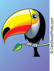 nice toucan