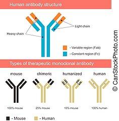 illustrati, antikropp, mänsklig, struktur