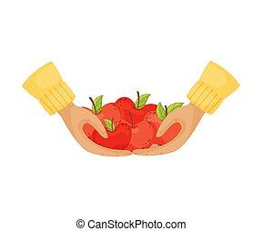 illustratie, appeltjes , witte , hands., achtergrond., vector