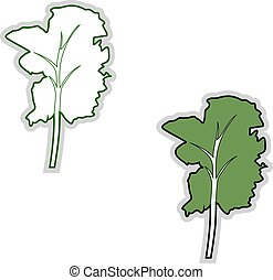 illustratie, boerenkool, achtergrond., vector, fris, witte
