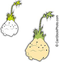 illustratie, celeriac, achtergrond., vector, fris, witte
