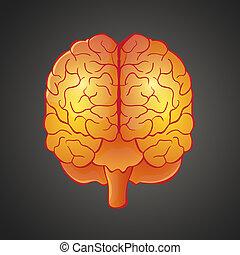 illustratie, hersenen, grafisch