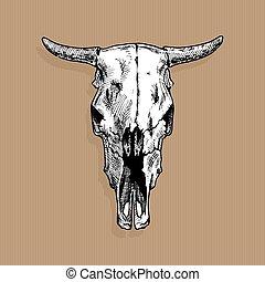 illustratie, schedel, stier