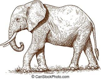 illustratie, van, gravure, elefant