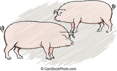 illustratie, varken
