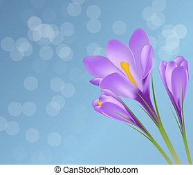 illustratie, vector, bloem, achtergrond, krokus