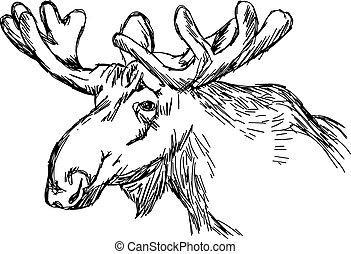 illustratie, vector, doodle, hand, getrokken, van, schets, eland kop, vrijstaand, op wit, achtergrond.