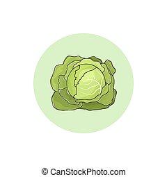 illustratie, vector, groente, witte kool, pictogram