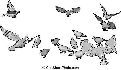 illustratie, vogels, witte , vector, achtergrond., hemel