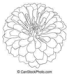 illustration, élément, hand-drawn, vecteur, conception, floral