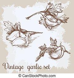 illustration., κρασί , set., χέρι , βοτάνι , μικροβιοφορέας , σκόρδο , retro , φόντο , sketched, μετοχή του draw , αλάτι , garlics., κουζίνα
