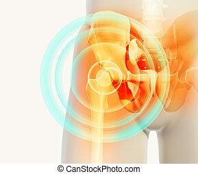 illustration., тазобедренный, рентгеновский, болезненный, скелет, 3d