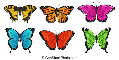 illustration., セット, カラフルである, butterflies., ベクトル