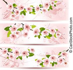 illustration., 春, 開くこと, 3, flowers., ベクトル, sakura, 旗, ブランチ
