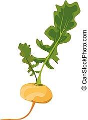 illustration., 色, 黄色, ∥あるいは∥, ベクトル, カブ