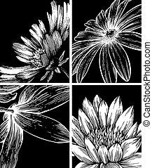 illustration., achtergronden, verzameling, bloemen, vector, hand-drawing.