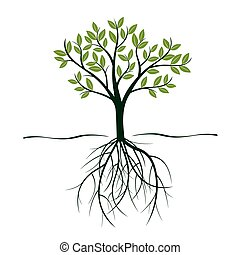 illustration., albero, leafs., vettore, verde, radici