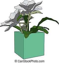 illustration, arrière-plan., vecteur, fleurs blanches, pot