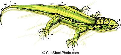 illustration, arrière-plan., vecteur, lézard vert, blanc