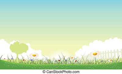 illustration, av, a, vacker, trädgård, av, blomningen, landskap, med, tusensköna, vallmoer, och, cornflowers, in, fjäder, eller, sommar, kryddar