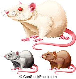 illustration, av, labb råtta, vita