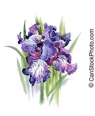 illustration., azzurramento, acquarello, fiori, iride